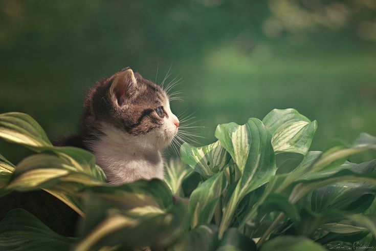 Incredible Cat Photographer Catches Cats In Private Moments | 8 | - Three Million Dogs