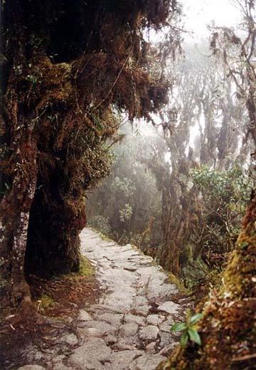 Camino del Inca   Peru