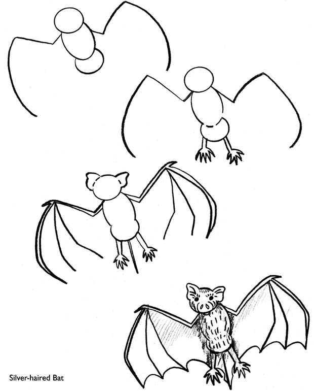 How to Draw a Silver-Haired Bat - free sample page from Dover Publications.