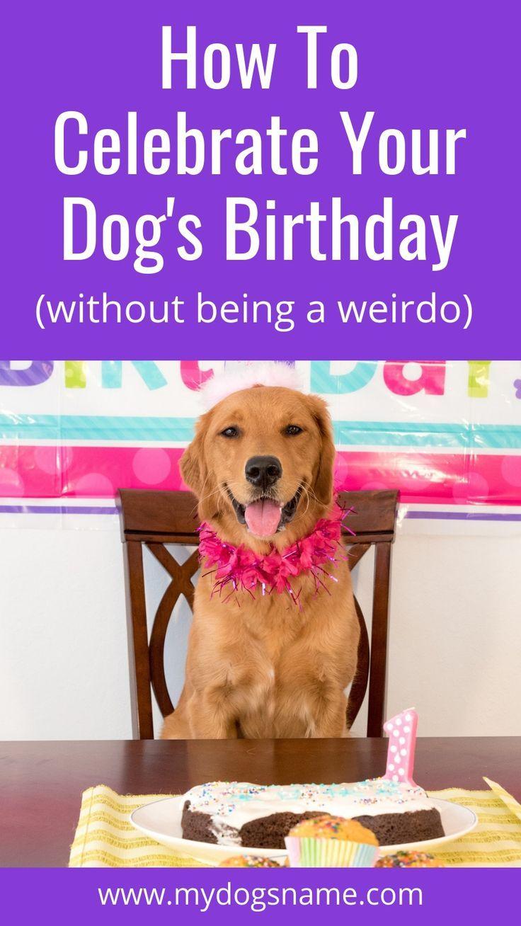 7 Fun Ways To Celebrate Your Dog S Birthday Dog Birthday Your Dog Dogs