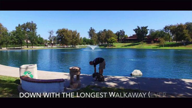 nice Dog Training For MMA Legend Dan Henderson! Celebrity Dog Trainer, Nick White! Dog Training