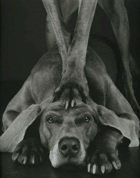 William Wegman Man Ray | Paw , 1994, Silver Gelatin Print