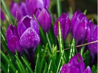 Фиолетовые цветы фото 2