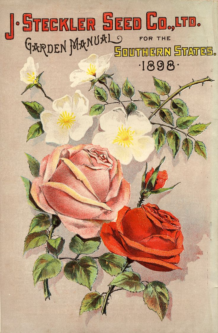 1191 best 3 Vintage Plant Seed Catalogues images on Pinterest