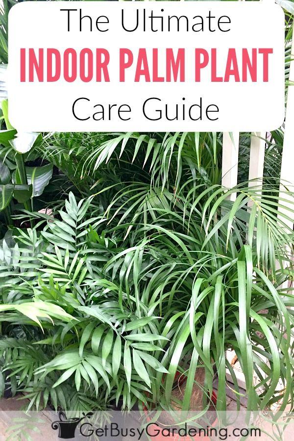 Indoor palms 25 pinterest - Indoor plants that require little care ...