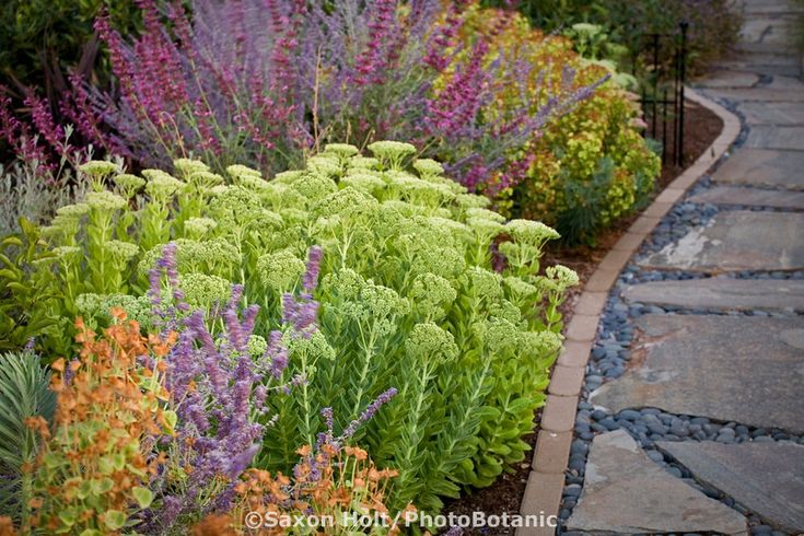 Drought tolerant garden with sedum Autumn Joy, salvias, euphorbias and other perennials. Nice stone and pebble and brick walkway and ironwork.