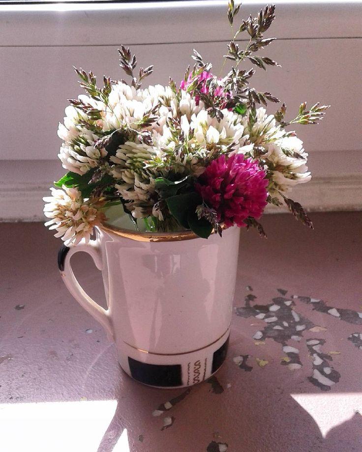 Dzień dobry! Witam bukiecikiem tym razem białych koniczynek nazbieranych po drodze do sklepu...Świeci słońce,troszeczkę chmur też jest...Miłego wtorku dla Wszystkich♡♡♡ #ranek #poranek #dzieńsiębudzi #bukiecik #koniczynki #dzieńdobry #miłegodniawszystkim #goodmorning #morning #bouquet #clovers #whiteclovers #haveaniceday #добрыйдень #утро #букетик #нежныйбукет #доброгоднявсем