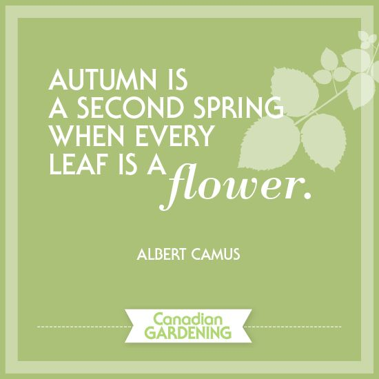 Albert Camus Summer Quote: 30 Best Images About Our Favourite Garden Quotes On