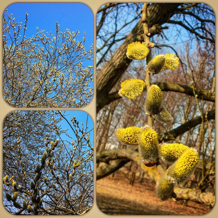 #spring #sun #sunlight #sunset #blue #sky #yellow #flowers #tree #garden #parc #wounderfull #mood #lovely & #beautiful #day