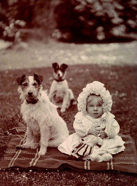 Le Parson Russell Terrier 4d66de7f90514921071b92e10f47b291