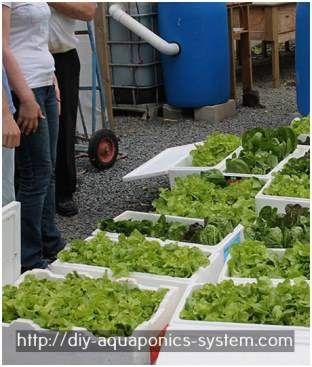 hydroponic greenhouse for sale - aquaponics garden design.aquaponic gardening book 4392079866