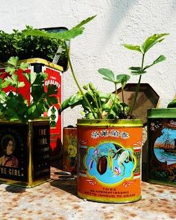 Dana Garden Design: Barattoli di latta riciclata, dallo stile vintage, per l'orto aromatico.