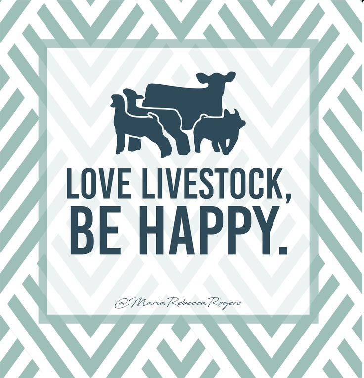 C Stock Quote: 42 Best Livestock Quotes Images On Pinterest