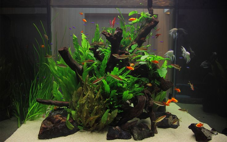 Stunning freshwater fish tank design bringing together
