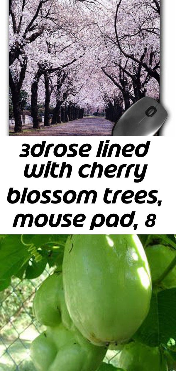 3drose Lined With Cherry Blossom Trees Mouse Pad 8 By 8 Inches 7 Cherry Blossom Tree Cherry Blossom Mouse Pad