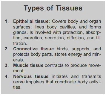 four types of tissue - Google Search