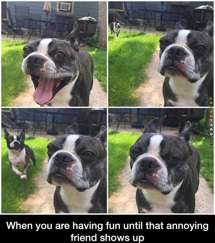 Annoying Friends