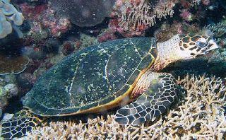 mijn persoonlijke ervaringen: Turtles Curaçao.