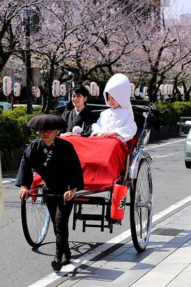 Ancient city warm solemn wedding to be performed in the symbol-Tsuruoka Hachiman Shrine in Kamakura. Shiromuku, your photography in the rickshaw and arched bridge in the crested hakama also warm blessing from tourists visited ...