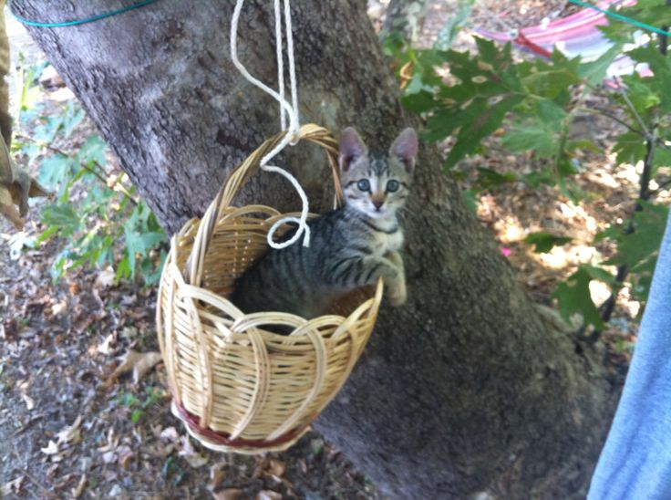 Cat of Samothraki