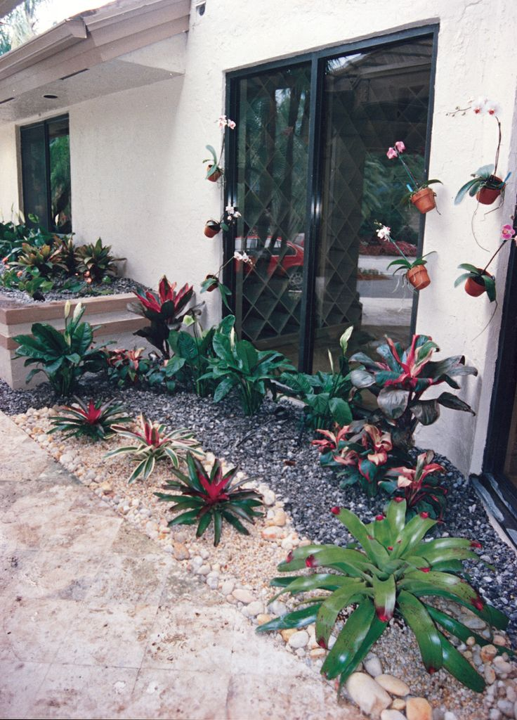 55 Best Images About Bromeliad Landscaping On Pinterest Gardens Jupiter Florida And Delray Beach