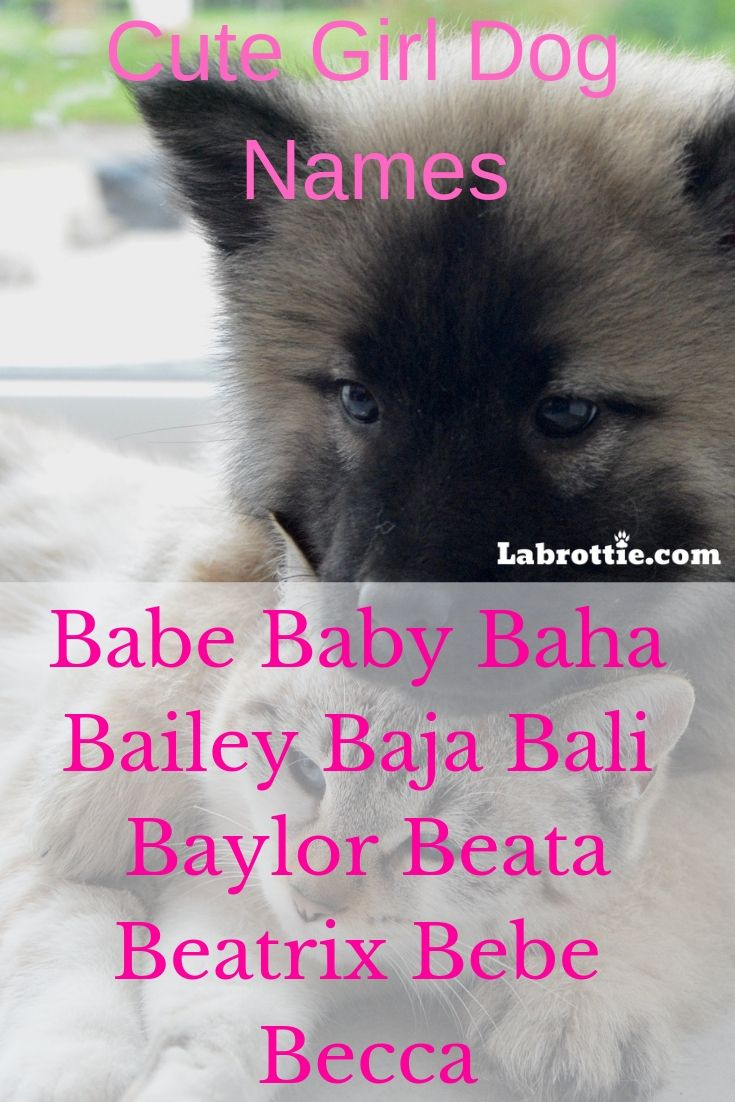 Want To Know A Hundred Cute Girl Dog Names Then You Have Come To The Right Place 2019 2018 Unisex Short White Hus Dog Names Girl Dog Names Girl And Dog