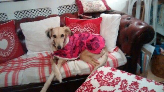 Roxy posh paws, new house coat, toasty cosy