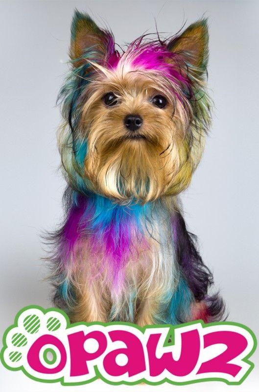 257 best Puppy Love ♡ images on Pinterest