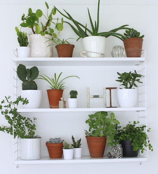 5 easy ways to give a terracotta plant pot a new look | Growing Spaces