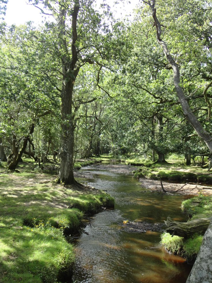New Forest, England. This used to be Henry the VIII hunting grounds -lots of wild horses-quite tame