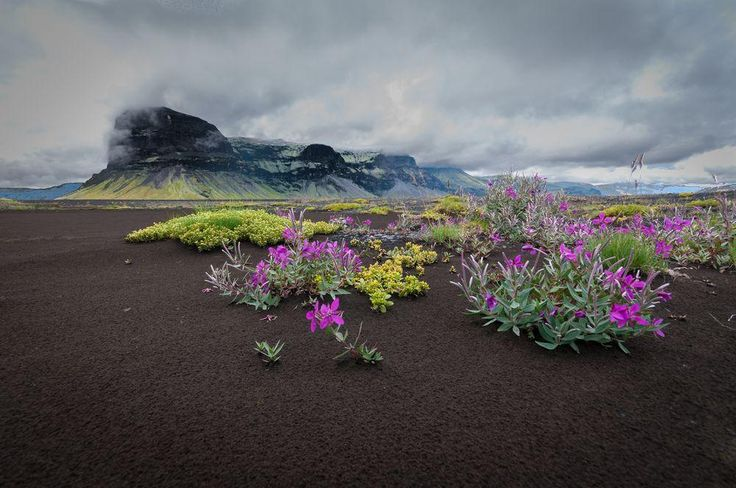 From ashes Photo by Kenneth McDowell — National Geographic Your Shot