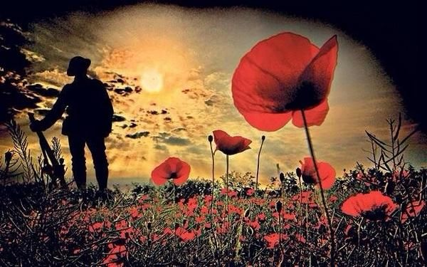 anzac poppy lest we forget - Google Search