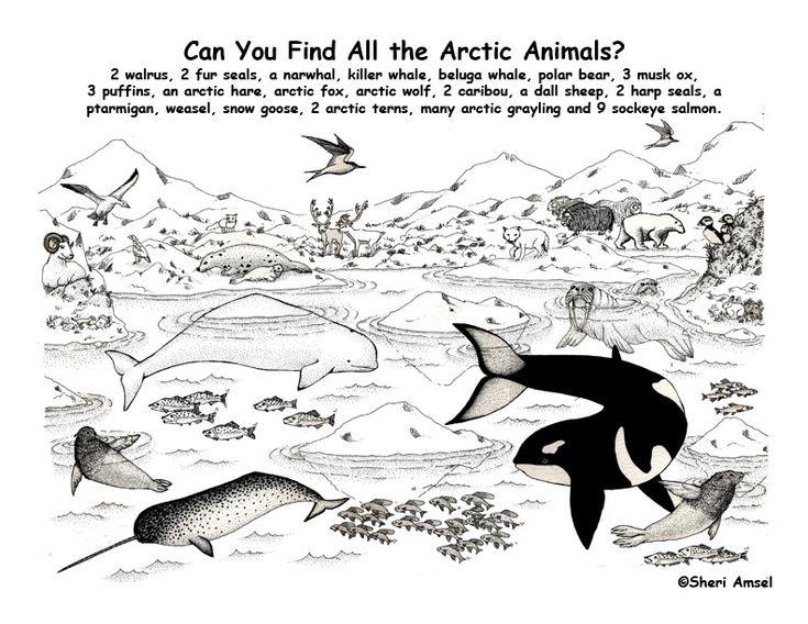 87 best Polar Animals Unit images on Pinterest | Polar animals ...