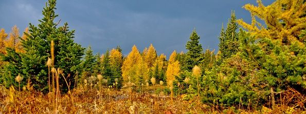 Parks Canada - Banff National Park - Larch Day-Hikes