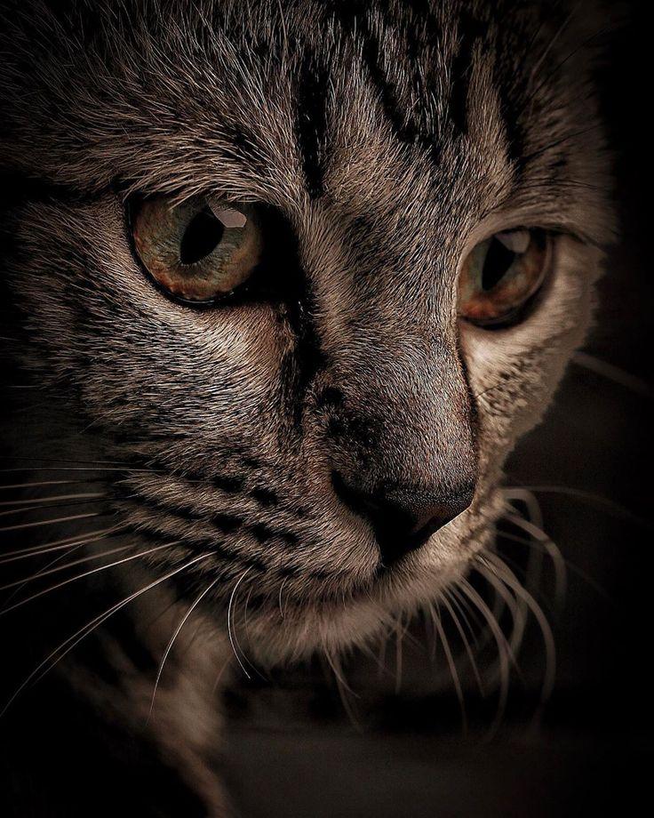 же, фото фото на аву грустные котики фото наш маршрут