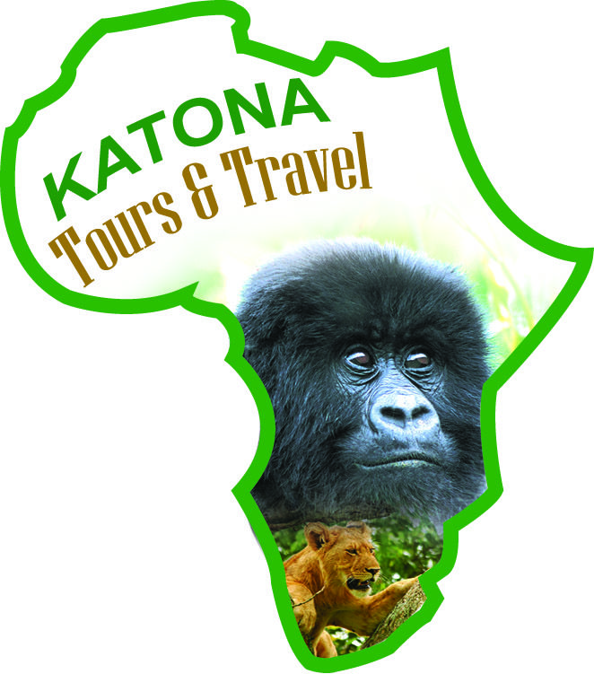 Join our Budget group tours to Uganda and Rwanda. Buy gorilla permits . www.katonatours.com   info@katonatours.com  , jaquka@yahoo.com    , +256774167100