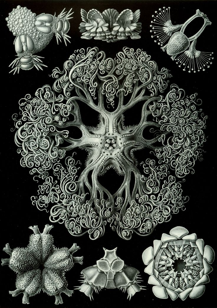 Ernst Haeckel's Art Forms from Nature - Buscar con Google