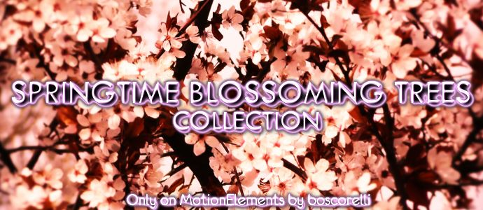 Great Collections from Boscorelli on http://www.motionelements.com/blog/collections/great-collections-from-boscorelli