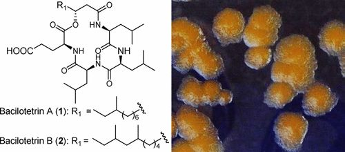 Bacilotetrins A and B, Anti-Staphylococcal Cyclic-Lipotetrapeptides from a Marine-Derived Bacillus subtilis