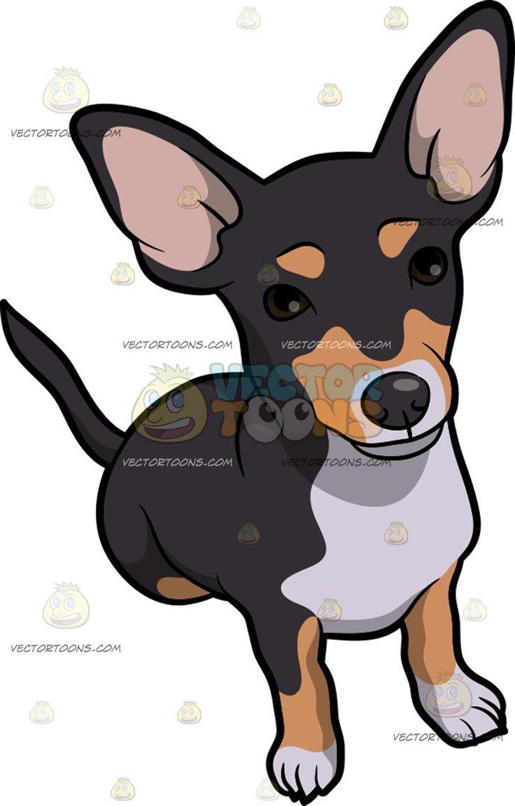 A Cute Chiweenie Dog A Chiweenie Dog With Black Golden