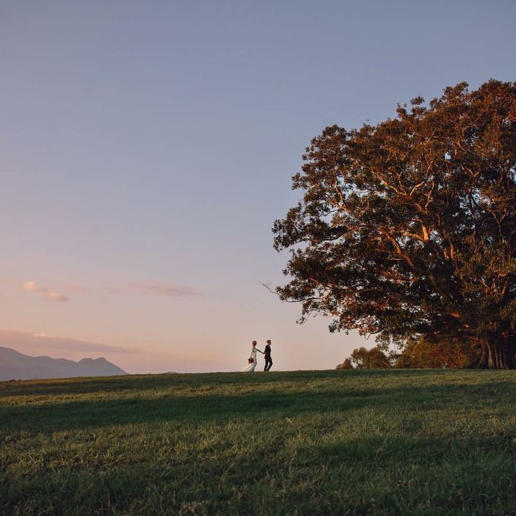At the lone fig tree @ midginbil hill sunset wedding on the countryside  @ivyroadphotography