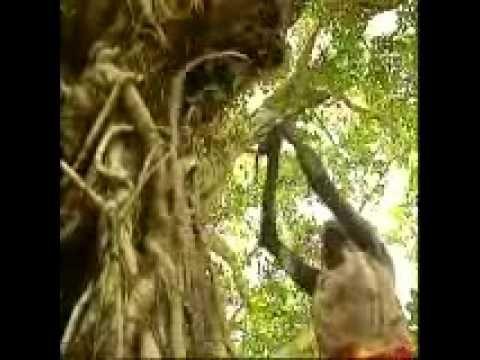 The Most Amazing Song Ever - Wiyathul by Geoffrey Gurrumul Yunupingu     So Spiritual.