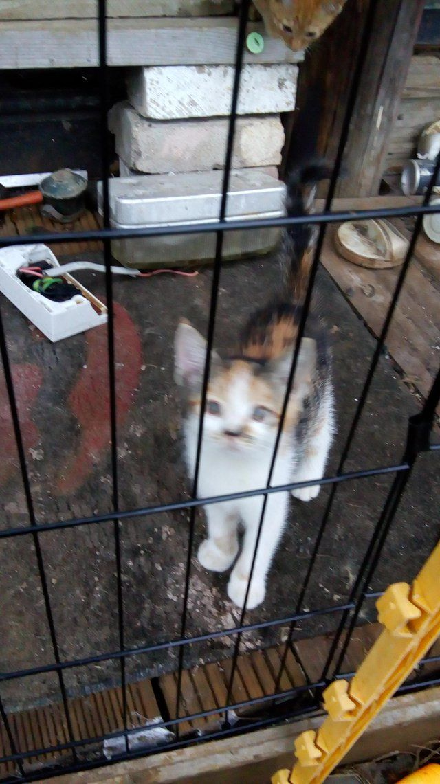 Cats Kittens Rehome Buy And Sell Preloved In 2020 Cats And