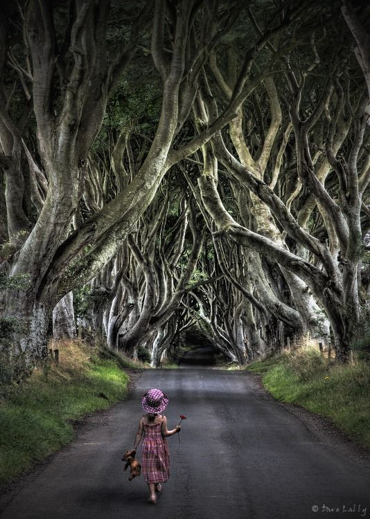 """The Dark Hedges, Ireland."" Ok, now I want to go to Ireland."