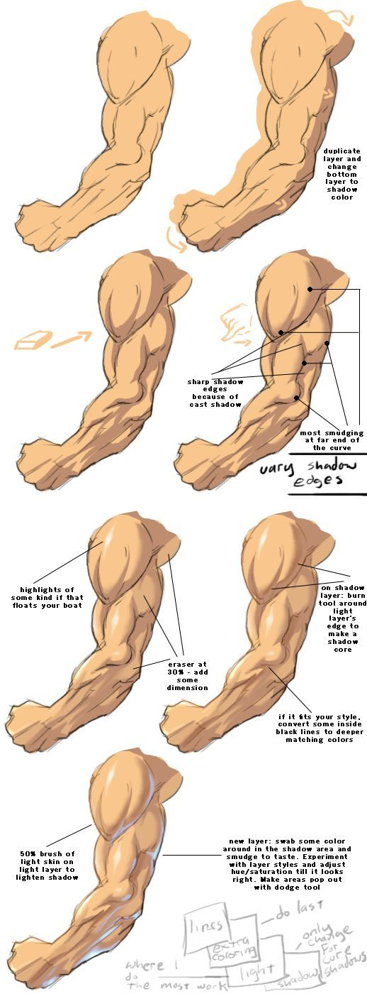 32 best references images on pinterest | anatomy reference, human, Muscles