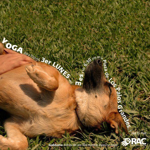 (122) Twitter Yoga en la Plaza de Los Palos Grandes a beneficios de Red de Apoyo Canino