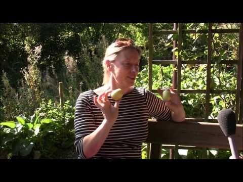 Interview mit Andrea Hein zum Apfelfest - YouTube