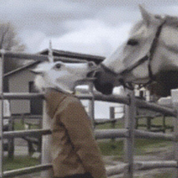 21 Best GIFs Of All Time Of The Week #172     21 Best GIFs Of All Time Of The Week ...            No more horsin' around. It's time to come face-to-face with this week's best GIFs.          Submitted by:   best GOAT            Regular          Keywords:  funny   gifs   best of the week   21 best gifs   fails   kids   unexpected   dogs   animals   combined gifs   wtf           Views: 475  http://www.funnyordie.com/slideshows/5e293b7d6a/21-best-gifs-of-all-time-of-the-week-172