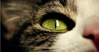 Why do cats have vertical pupils? University of Cambridge | Naked Scientists