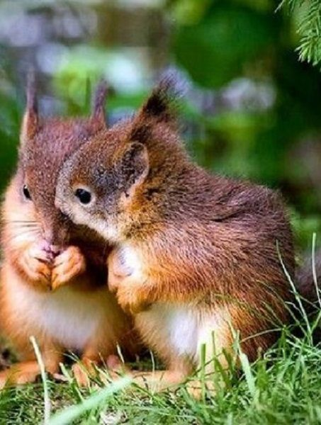 Baby squirrels...awww